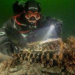 Descubren una máquina «enigma» en el fondo del mar báltico