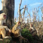 Los monos se vuelven más tolerantes con los demás, incluso con competidores, tras una catástrofe